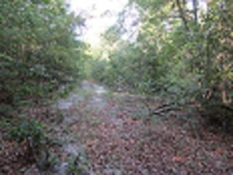 Land for Sale in Millen, Georgia Millen