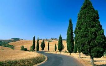Farm House or Holidays Siena