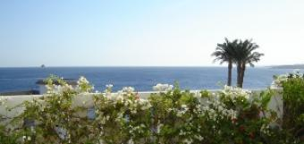 The best apartments in Nabq. Sharm El Sheikh